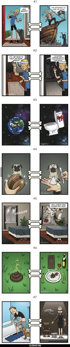 Human Vision vs Dog's Vision#funny #lol #lolzonline