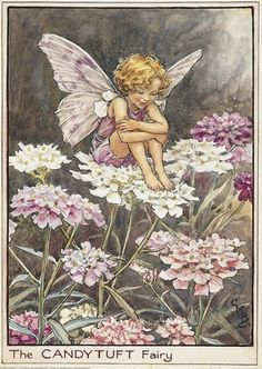 Cicely Mary Barker Flower Fairies print