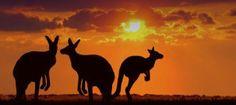 Ce qu'il faut savoir sur l'Australie - L'EXPRESS