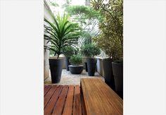 A varanda em frente à sala de jantar tem banco e deque de ipê, vasos altos com pleomeles-variegadas e dracena-arbórea. Ao fundo, de diferentes alturas, ficam as clúsias. Projeto do paisagista Marcelo Faisal