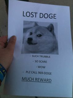 I don't know why the Doge memes make me laugh so hard..But they do. Such fun.