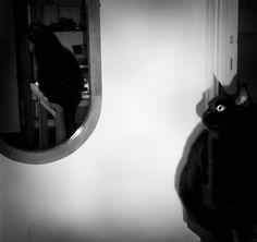 Albert in the mirror