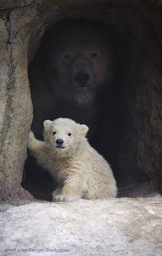 polar bear cub and the protector in the shadows