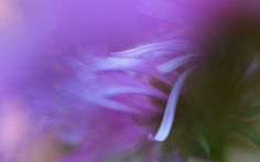 Beauty of Macro, Fine Art Photography, MacroOctober 12, 2015 Aster Arabesque By Anna VanDemark