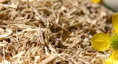 Eleuthero Root Cut, (commonly known as Siberian Ginseng) contains compounds that help the body respond more quickly to stress. Eleuthero Root has been used to treat depression, fatigue debility, stress, lethargy, and immune deficiency. Eleuthero Root Cut has also been shown to increase endurance, and improve memory and appetite.