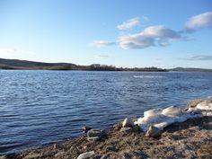 Jemina Staalon Veden vuosi 2: Annikki Kariniemi: Kaikkien päät ei kestä jäittenlähtöä