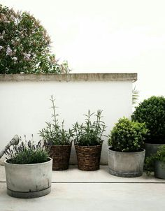 not every garden pot needs to be naff - here are some stylish concrete pots to add an edge to your garden porch - Gardening Take Outdoor Plants, Outdoor Gardens, Landscape Design, Garden Design, Pot Jardin, Dream Garden, Garden Pots, Garden Bed, Balcony Gardening
