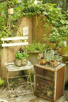 Japanese garden blog