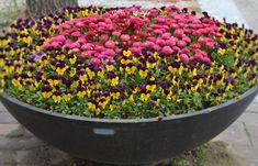 Upeita kokonaisuuksia saa yhdistämällä kahta eri väriä vaikka mukaillen ruukun muotoja.
