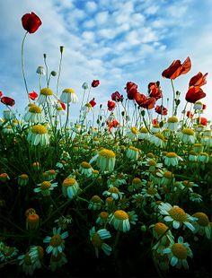 Virágzás - Blooming