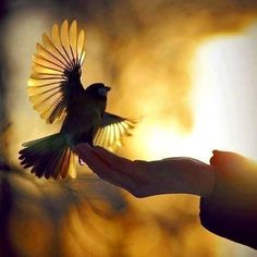 Hope is a thing with feathers   That perches in the soul   And sings a tune without words   And never stops at all................     I've heard it in the chilliest land   And on the strangest sea   Yet, never, in extremity   It ask a crumb of me.  Emily Dickinson