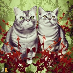 We painted our wonderful friends Minty and Perry of @yanksgal23  Follow them @yanksgal23  If you would like to commission Eggs and Punky's #Catdaddy @jimiyodotcom please visit Jimiyo.com/pet. He can help you get you cats on mugs leggings scarves and more.  Mew!  #exoticshorthair #cat #cute #flatface #kitten #meow #pet #mreggs #catlover #exoticsofinstagram #smushface #weeklyfluff #illustration #bromance #wacom #photoshop #base