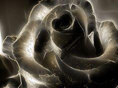 Black Rose - Flowers Wallpaper ID 1087224 - Desktop Nexus Nature
