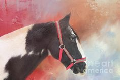 Gypsy Horse, Top Artists, Horses, Black And White, Artwork, Red, Animals, Mixed Media, Work Of Art