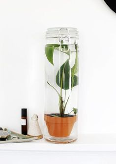 The best DIY projects & DIY ideas and tutorials: sewing, paper craft, DIY. Diy Crafts Ideas DIY Potted Water Plant The Merrythought -Read Indoor Water Garden, Indoor Plants, Water Gardens, Diy Potted Plants, Pot Plants, Green Plants, Diy Garden, Garden Pots, Garden Ideas