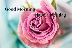 Free photo: Rose, Flower, Petal, Love, Floral - Free Image on Pixabay - 3142529 Bokeh, Beautiful Flowers Pictures, Rose Pictures, Rose Images, Flower Images, Heart Images, Flower Photos, Pink Rose Flower, Flower Petals