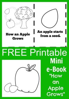 """FREE Apple Life Cycle """"How an Apple Grows"""" Printable mini e-book with coloring pages for kids and teachers"""