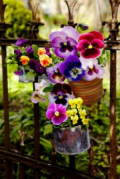 Pansies on a wrought iron fence in different containers...sweet