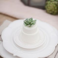 Using a succulent as a cake topper is a unique way to bring in a rustic or vintage vibe to your wedding cake! {Christa Elyce Photography}