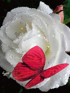 The perfect Rose Butterfly Animated GIF for your conversation. Discover and Share the best GIFs on Tenor. Flowers Gif, Beautiful Rose Flowers, Beautiful Gif, Beautiful Butterflies, Butterfly Gif, Butterfly Wallpaper, Images Aléatoires, Gif Bonito, Glitter Graphics