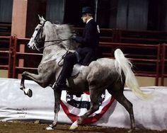 The Stormwatcher: 2007 grey Saddlebred stallion