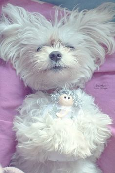 5 Adorable puppies cuddling with stuffed toys | The Pet's Planet
