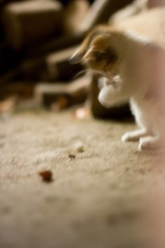 #photography #movement #cat #catlovers #minimalist #kocka #focení #pohyb #hra #photoblog #fotoblog