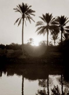 Sunset on palm trees
