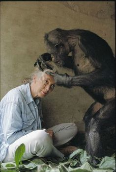 ♂ together michael nichols - jane goodall groomed by gregoire, a chimp who has been alone in a concrete cage in the brazzaville zoo since 1945 (national geographic, 1995)