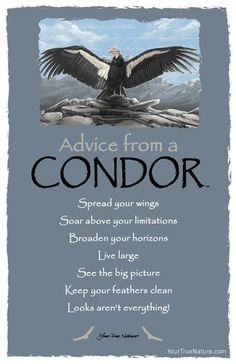 Each postcard says: Advice from a Condor Spread your wings Soar above your limitations Broaden your horizons Live large See the big picture keep your feathers c Advice Quotes, Life Advice, Good Advice, Wisdom Quotes, Me Quotes, Advice Cards, Condor, Animal Medicine, Animal Spirit Guides
