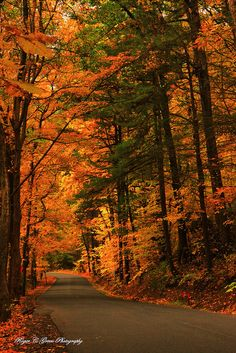 Fall road in Saugerties, Catskills Mountains, New York; photo by .Roger C… Beautiful World, Beautiful Places, Autumn Scenes, All Nature, Autumn Nature, Warm Autumn, Fall Pictures, Jolie Photo, Beautiful Landscapes