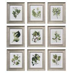 9 Piece Botanical Study Framed Print Set