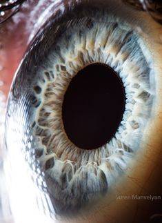 Suren Manyvelvan captura macro imagens de olhos