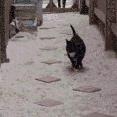 すごい特技を持つ動物たち(GIF画像):ハムスター速報