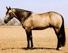Beautiful quarter horse... Looking for a horse for Landry!