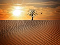 Free Image on Pixabay - Landscape, Sand, Drought, Tree, Sky Pictures Images, Free Pictures, Free Images, Global Warming Climate Change, Feature Article, Alcohol Ink Painting, Amazing Pics, Free Illustrations, Natural World