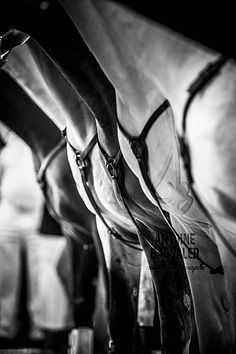 rejonI-15 by Antoine Bassaler, via Flickr || BW dappled grey english breast collar line