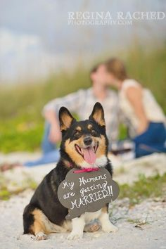 """Aww - too bad we didn't think of this for the engagement pictures! Rupert might need a sign at the wedding. I like how it says """"my humans."""" We totally belong to our dog! - weddingsabeautiful.com"""