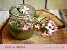 Mydlice lékařská Herb Garden, Home And Garden, Korn, Mason Jars, Herbs, Herbs Garden, Mason Jar, Herb, Glass Jars