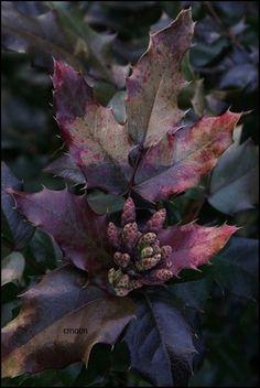 swansong-willows:  (via Pin by ~ BJ ~ on ~Autumn's Purple Haze~ | Pinterest)