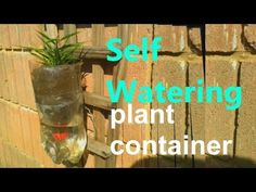 Self watering system for plants using soda plastic bottle This super cool self watering bottle idea will change your life. DIY Self Watering Planter Automati. Self Watering Bottle, Diy Self Watering Planter, Self Watering Plants, Container Plants, Plastic Bottles, Soda, Roots, Make It Yourself, Projects