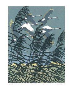 Whooper Swans Linocut by Robert Gillmor Wood Engraving, Wildlife Art, Linocut Prints, Bird Prints, Woodblock Print, Bird Art, Printmaking, Art Drawings, Art Photography