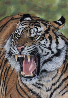 Extinct pastels by *Sarahharas07 on deviantART ~ Panthera tigris sondaica, Javan tiger