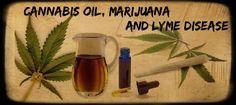 Cannabis oil, Marijuana and Lyme disease | What is Lyme Disease?