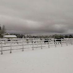 #talvipäivä #sunnuntai #laaksola #kangasala #heppajuttuja