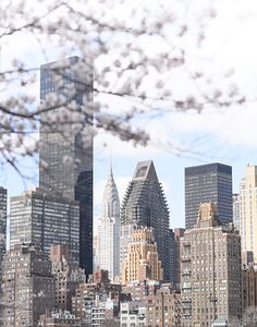 The New York City skyline as seen from Roosevelt Island in spring. #newyork #newyorkflowers #springinnewyork Spring In New York, Roosevelt Island, Floral Photography, Central Park, San Francisco Skyline, Cherry Blossom, New York City, Landscapes, Bloom