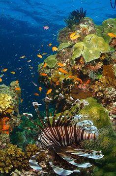 Great Barrier Reef, Australia https://www.pinterest.com/pin/526358275170756601/