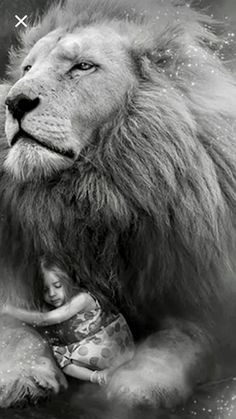 The Lion of the Tribe of Judah, my Abba Daddy. Giant Animals, Cute Animals, Lion Of Judah Jesus, Lion And Lioness, Lion Love, Lion Wallpaper, Tribe Of Judah, Lion Pictures, Jesus Art