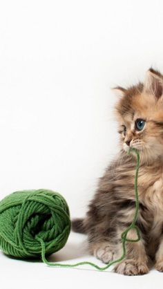 kitten with ball of green yarn - by benjamin torode