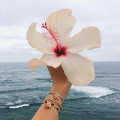 Tropical moments x summer feeling, summer vibes, summer beach, tropical vibes Fuerza Natural, Vibes Tumblr, Summer Photography, Tropical Vibes, Summer Aesthetic, Summer Vibes, Summer Feeling, Summer Beach, Aesthetic Pictures